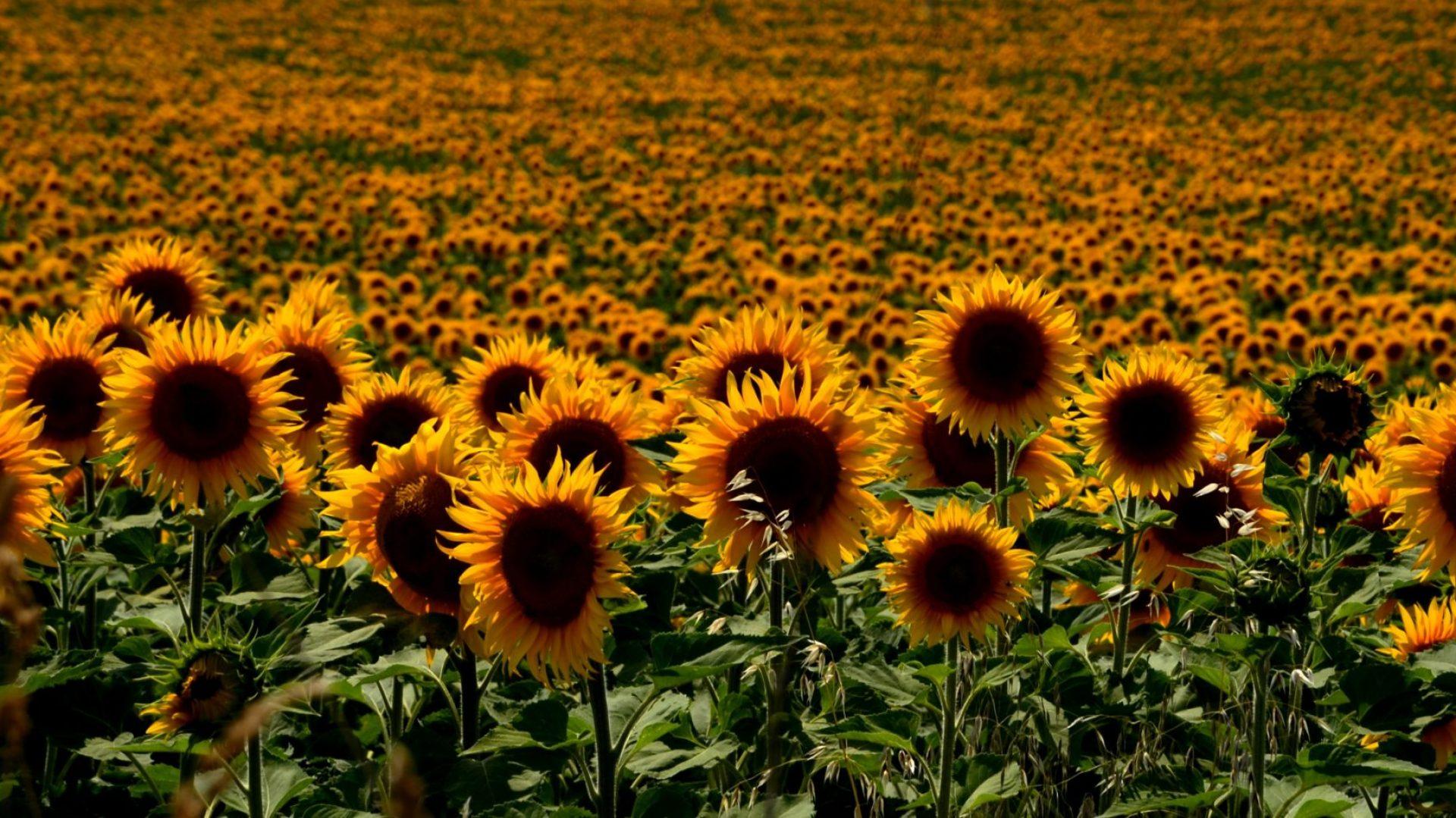 Agropro – Agroproducciones Oleaginosas